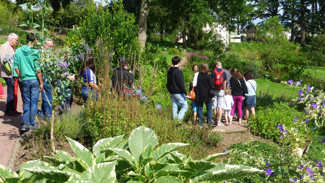 visite guidée Jardin Camifolia