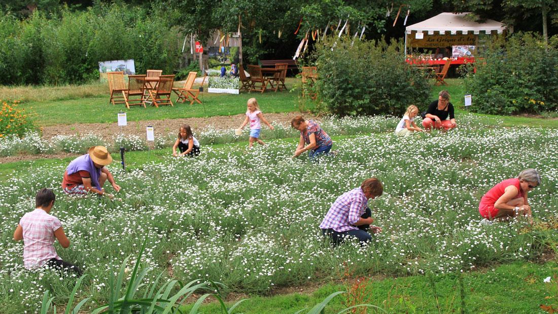 animation jardin, parc botanique, parc maine et loire