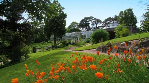 pavot Jardin Camifolia