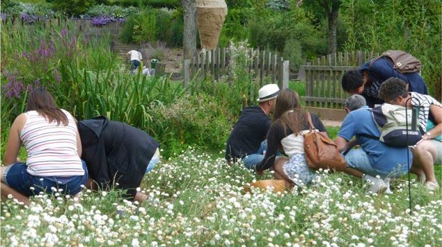 jardin cultures locales Jardin Camifolia