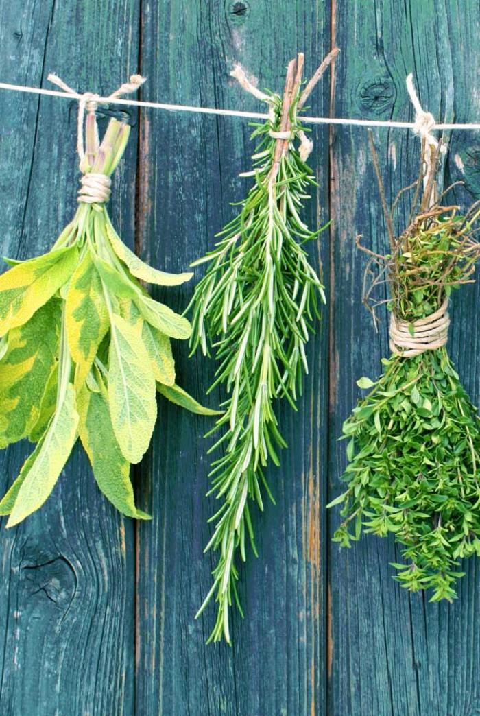 espèces Jardin Camifolia